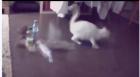 【猫片】微博热门动图的原版视频合集