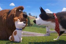 电影《爱宠大机密2》搞笑依旧 爱宠下乡滑稽奇遇笑不停
